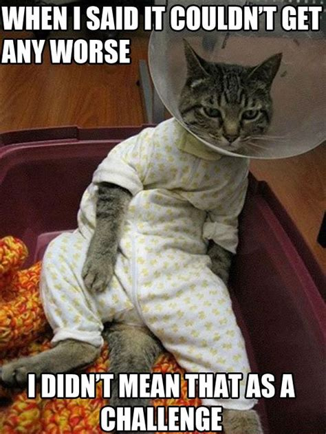 Funny Memes Cats - sick cat meme funny pictures quotes memes jokes