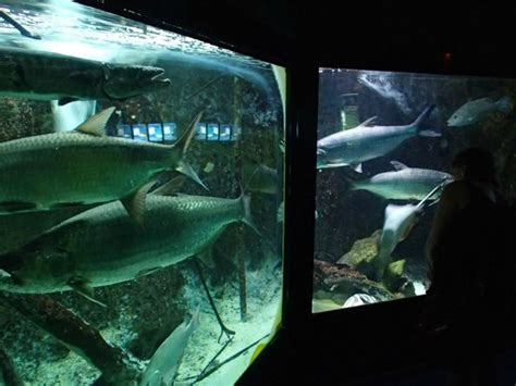aquarium le aquarium de la guadeloupe le gosier updated 2018 all