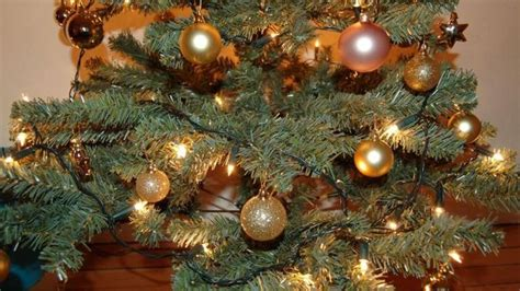 christmas tree bank in cambridgeshire to spread cheer