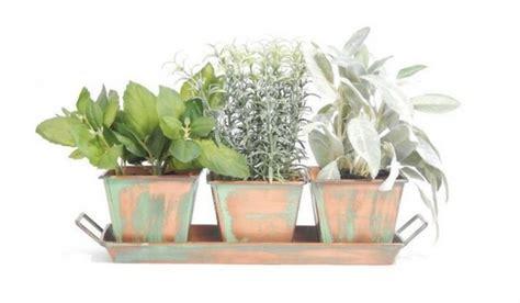 buy indoor herb garden apartminty fresh picks herb garden essentials for the