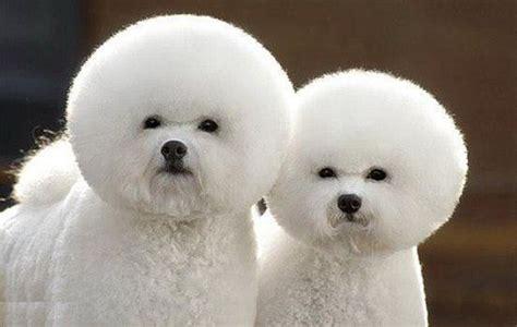 best gog miniature terrier best photos