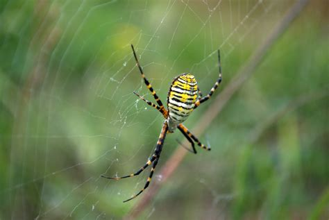 Garden Spider New Mexico 9 Banded Garden Spider 13 Of The Most Bad Bugs In New