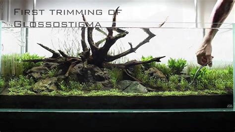 driftwood aquascape design an ada 120 p layout using manten stone and tx select