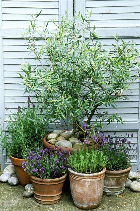 16 modern landscaping mediterranean garden ideas