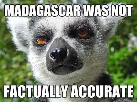 Lemur Meme - funny lemur meme