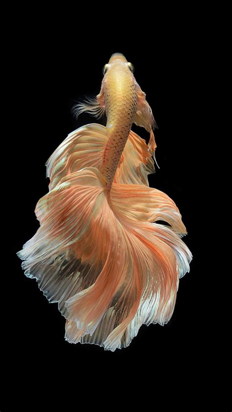 wallpaper for iphone fish iphone 7 fish wallpapers free download