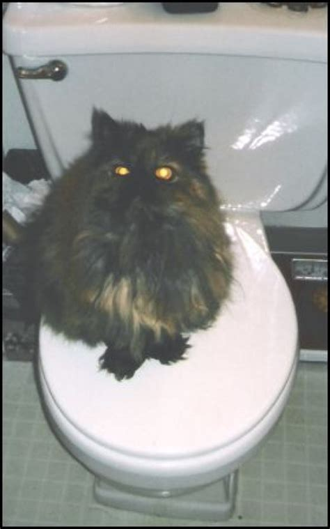 what to do when your is constipated what to do if your cat is constipated pethelpful