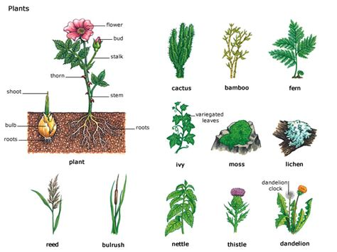 different types of garden plants plant classification parts of tree iasmania civil