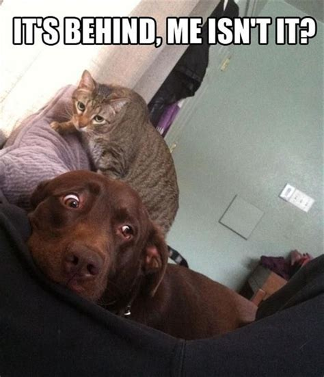 Dog Cat Meme - scarried dog meme funny pictures quotes memes jokes