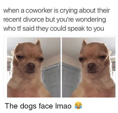 Crying Dog Meme - 25 best memes about coworkers crying dogs lmao and