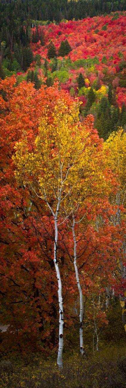 utah fall colors clint losee photography