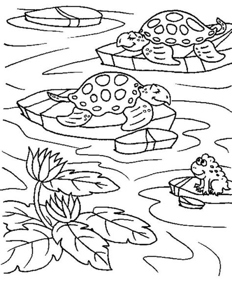 pond turtle coloring page pond animals coloring sheets murderthestout