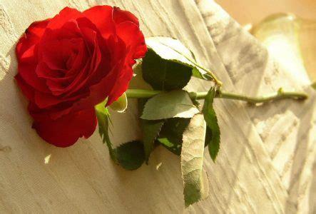 imagenes impresionantes de rosas imagenes de amor muy bonitas y con frases
