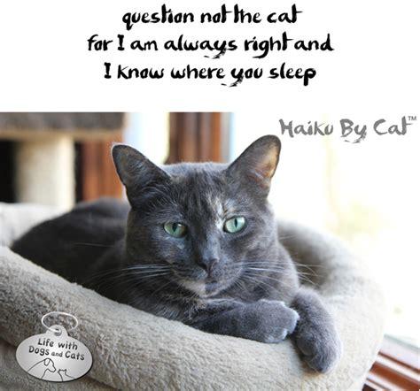 cats  literature catster