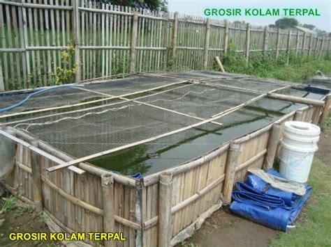 Harga Kolam Terpal Yang Sudah Jadi cara ternak lele kolam terpal agro terpal