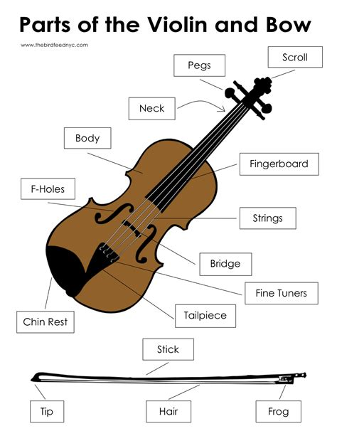 labelled diagram of a violin activity sheets parts of the violin and bow