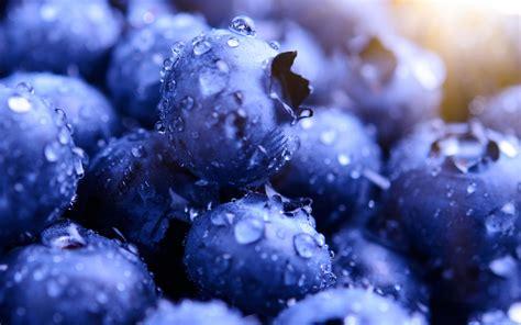 wallpaper blueberries macro hd lifestyle