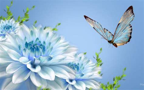 blue butterfly  beautiful blue flowers