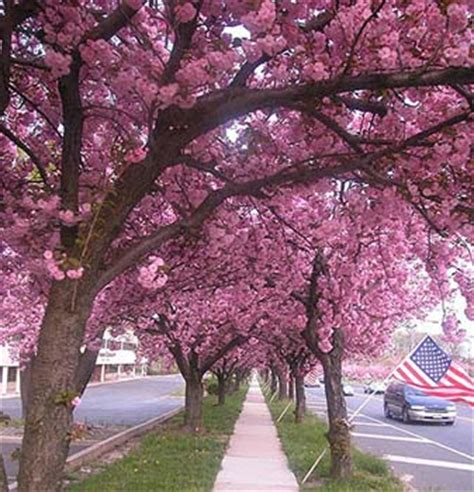 tree store cherry hill nj cherry hill new jersey information and hotels