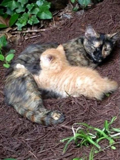 cat in backyard feral cat chose family s backyard to raise her only kitten