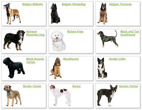 puppies and their breeds dangerous dogs list breeds picture