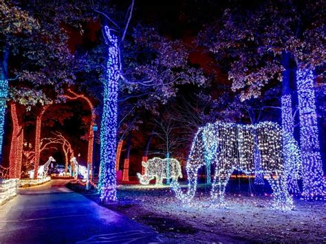 lights detroit zoo it s time for lights at the detroit zoo royal oak