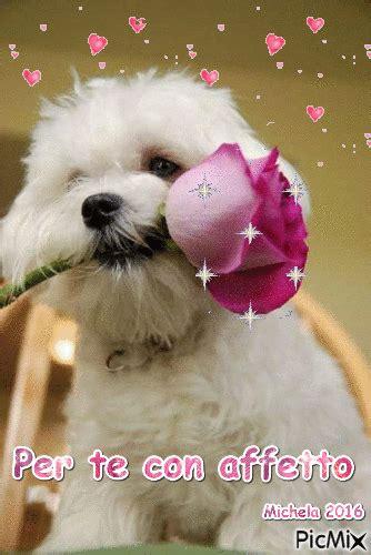 imagenes se feliz martes con perros per te con affetto picmix
