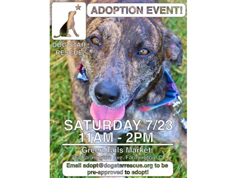 adoption events in ct rescue adoption event canton ct patch