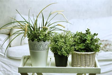 plant for bedroom jurgennation howldb
