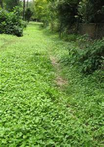 groundcover suggestions for shady backyard
