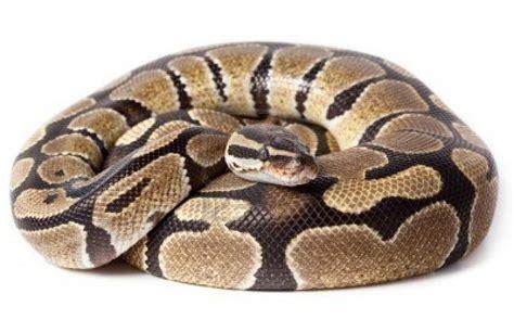 python image python facts python facts