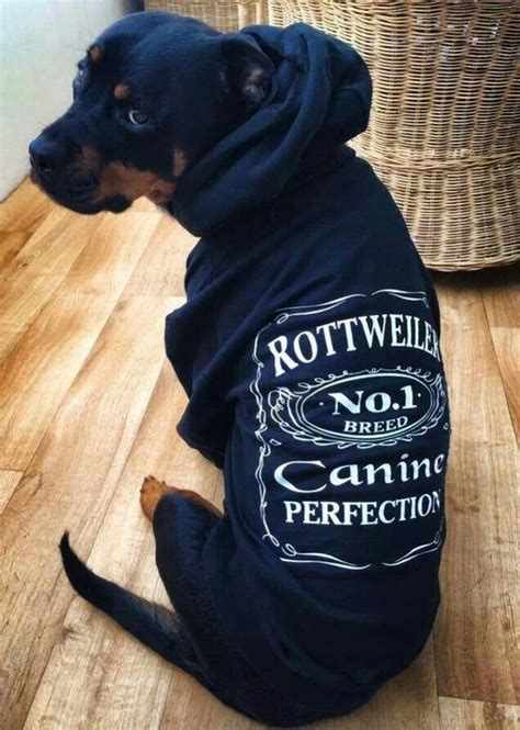 rottweiler clothes the world s catalog of ideas