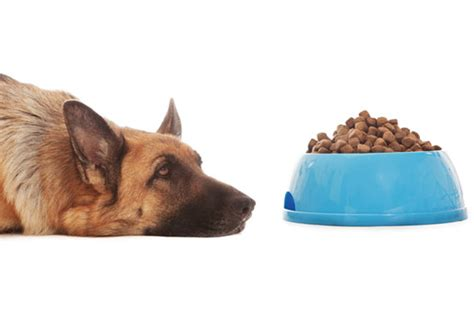 what can dogs not eat not maybe your pet food smells or tastes bad petmd