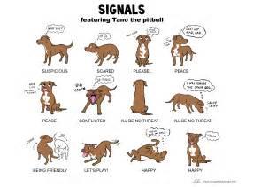 american pitbull terrier weight chart zabawa i nauka archives strona 3 z 8 biały jack