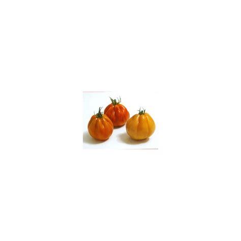 pomodori vaso pianta di pomodoro cuor di bue f1 levante vaso 10 cm