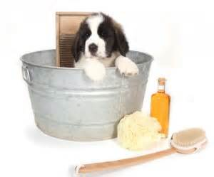 how often should you give a puppy a bath giving your puppy a bath the happy puppy site