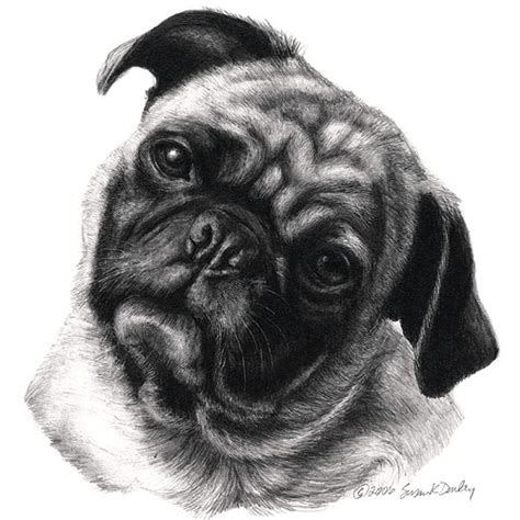 sketch of a pug pug portrait original pencil drawing prints apparel gifts pencil pastel