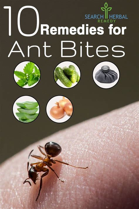 best 25 ant bites ideas on bug killer