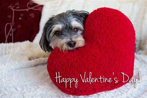 happy valentines day animals happy valentines day pictures with animals s