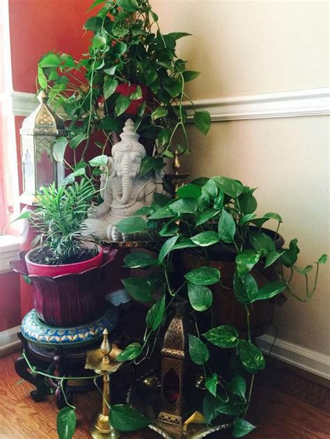 decorating plants indoor  indian  fashion