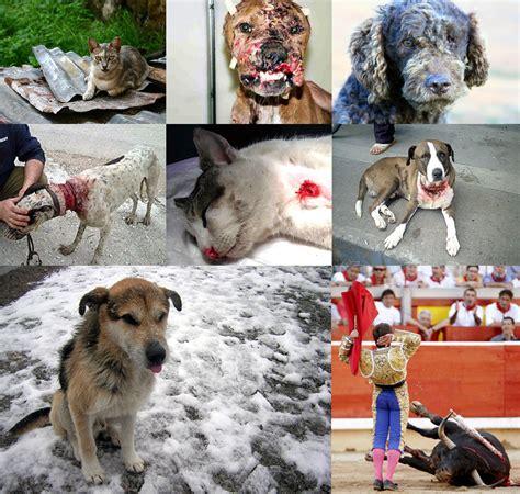 aviso este repaso al maltrato europeo a los refugiados frente al maltrato animal s 243 lo vale una justicia fuerte e