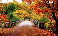Autumn Wallpaper Hd HD Flower &187