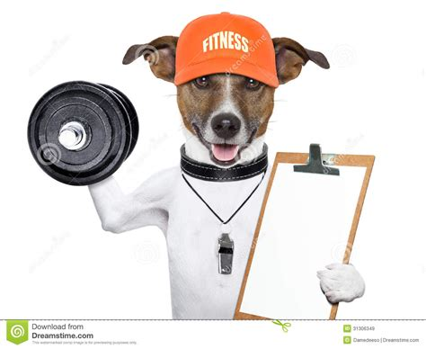 puppies and fitness fitness royalty free stock images image 31306349