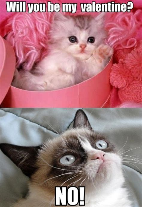 valentines grumpy cat kitten to grumpy cat will you be my