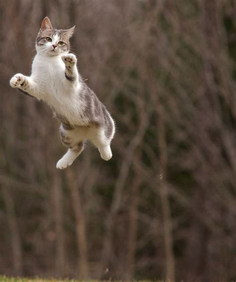 Jumping Animal By Acc 190 best jumping for images on fluffy pets