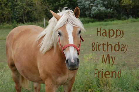 Birthday Cards With Horses On Them Horse Friend Birthday Photograph By Aimee L Maher