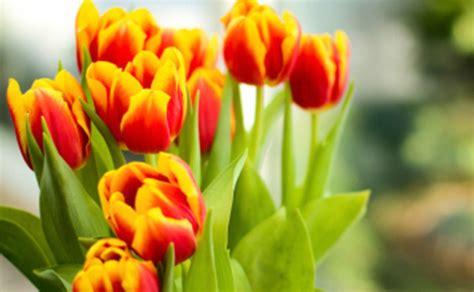 fotografie di fiori primaverili fiori primaverili vaso leitv