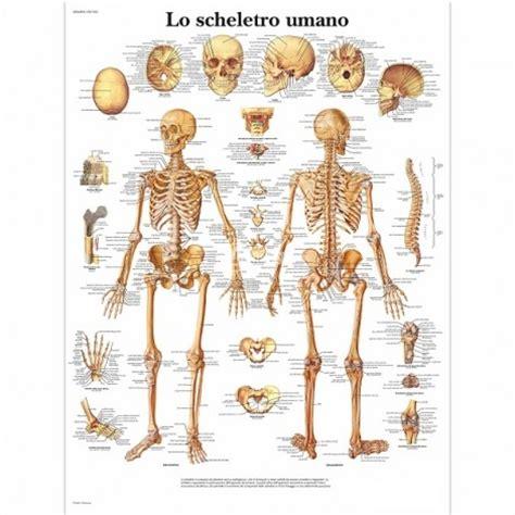 tavole anatomia umana poster dello scheletro umano didattico o arredamento