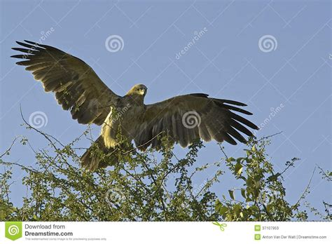Foot Detox Eagles Landing by Eagle Landing Stock Photos Image 37107953