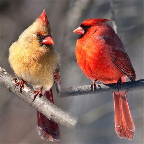 pin by mary bradford on birds pics pinterest